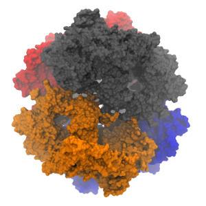 Альфа-2-макроглобулін (кров)
